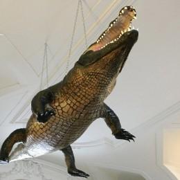 brnensky-krokodyl-v-mzm-3-ara_denik-630